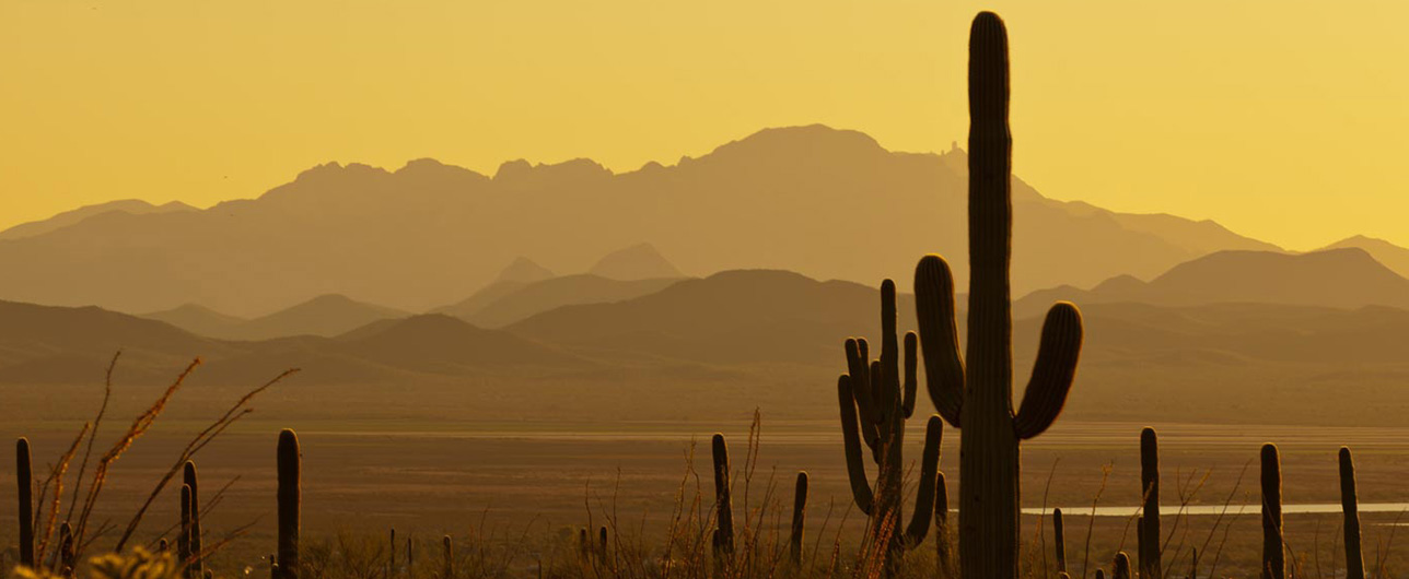Arizona scenery at dusk with cacti and mountains